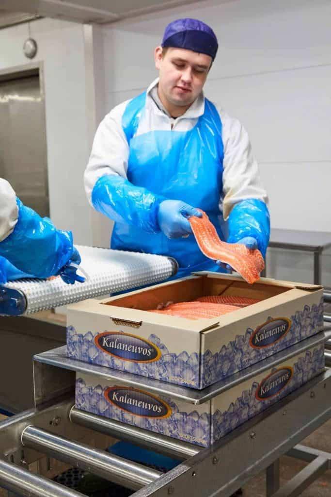 Kalaneuvos EcoFishBox kirjolohifileen pakkaus