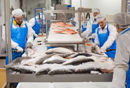 Kalaneuvos Tuotanto fileointi